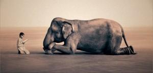 mindfulness-stefano-gentile