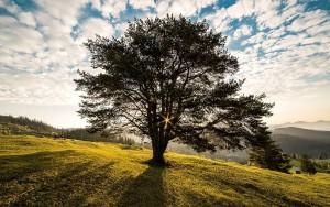 albero-della-vita-stefano-gentile-life-coach-coaching-padova-mestre-venezia-treviso-cadoneghe